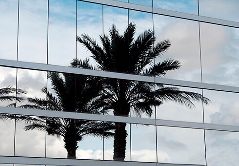Palm tree reflection in a corporate building.